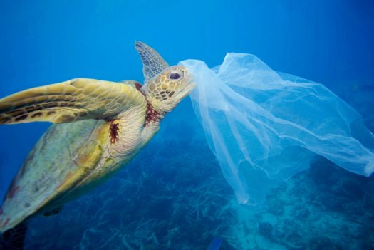 sea turtle eating plastic.jpg